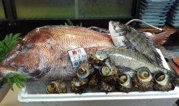 本日のおすすめは、天然真鯛とサザエのお刺身です